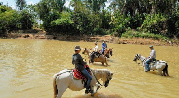 Corocora Camp – Kolumbianische Safari