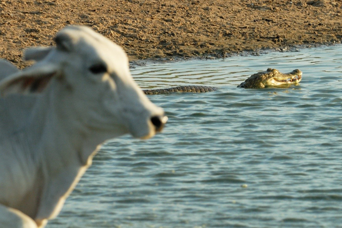 Wildlife in den Llanos