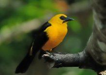 Kolumbien, das Paradies für Vogelbeobachter