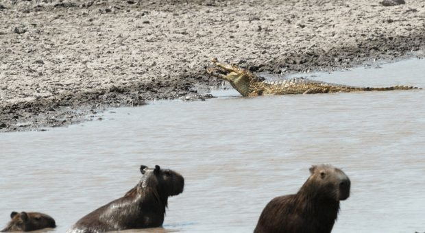 Wildlife en los Llanos