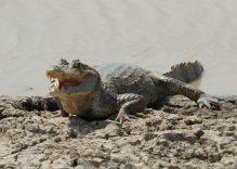 Wildlife in the Llanos