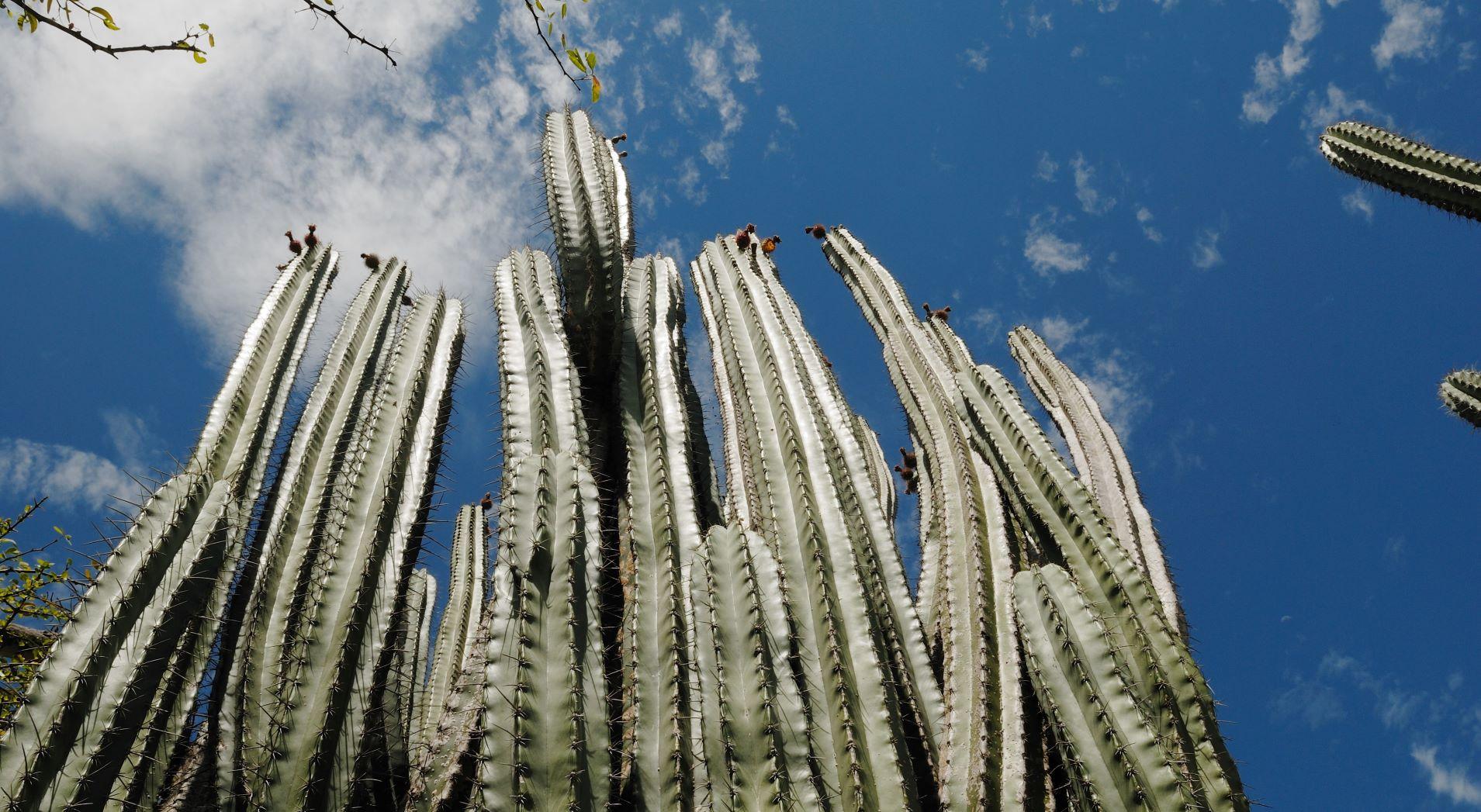 https://www.kontour-travel.com/wp-content/uploads/kaktus-tatacoa-desierto-huila-colombia-001-2.jpg